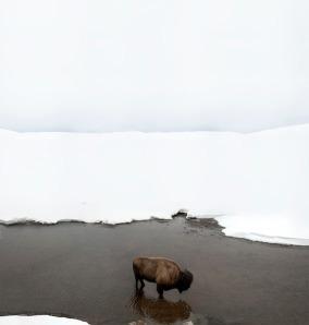 snowbuffaloriver